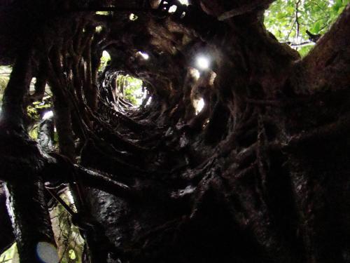 Uma árvore oca a ser escalada.